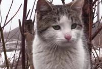 Видео военный кот