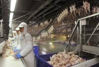 В Ассоциации птицеводов опровергли дефицит курятины в Украине